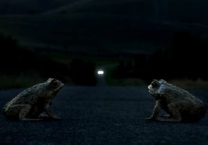 Video: Ford Australia Kills Frogs For EcoBoost Ad